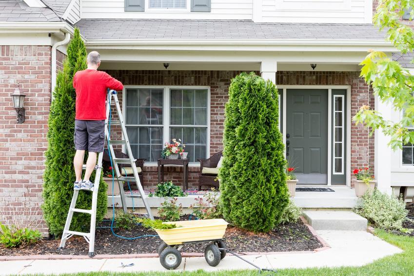 Mężczyzna podczas formowania krzewów, a także formowanie iglaków, ozdobne formowanie iglaków w ogrodzie
