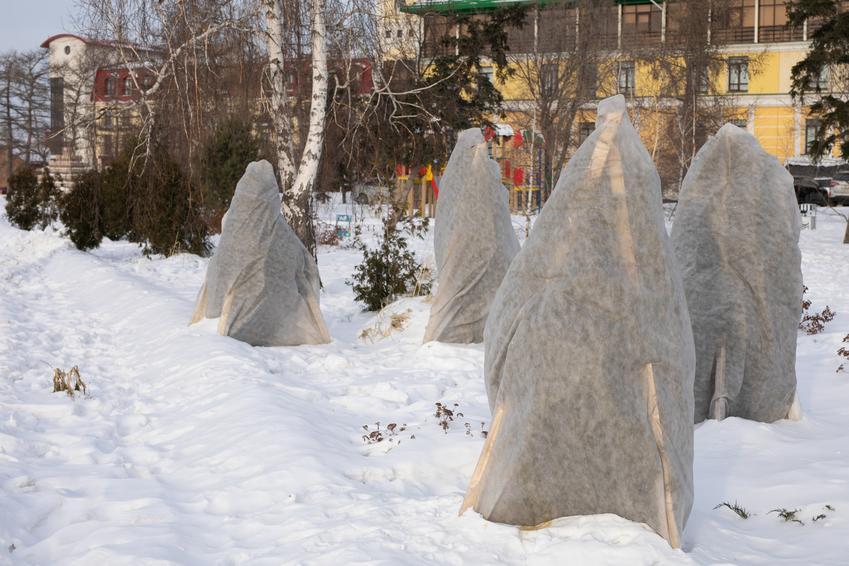 Rośliny w ogrodzie osłonięte w czasie zimy, a także zabezpieczenie drzew na zimę, zimowanie roślin