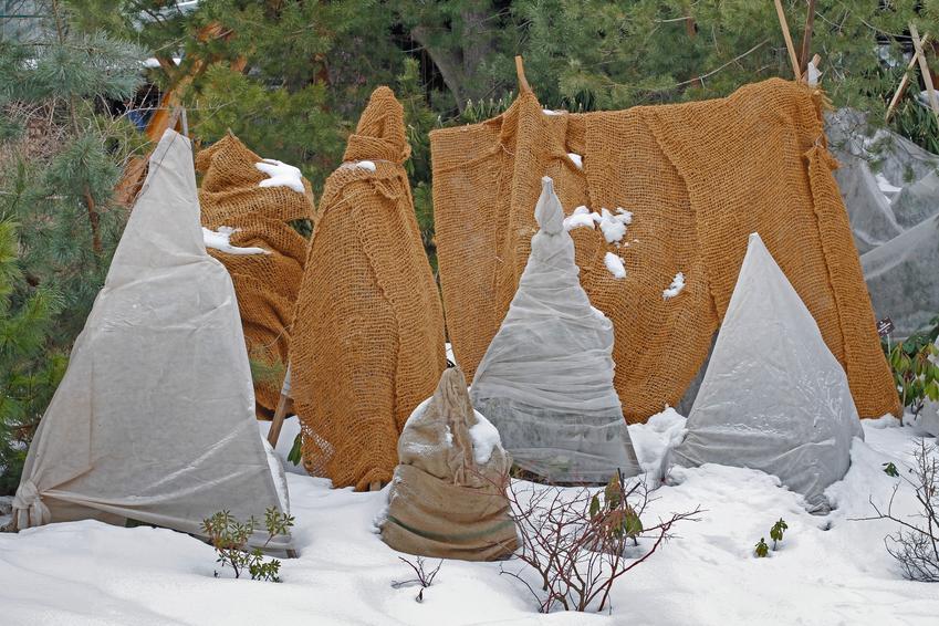 Zabezpieczone rośliny zimą w ogrodzie, czyli zabezpieczenie drzew na zimę, zimowanie roślin