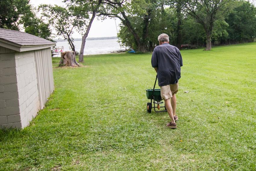 Mężczyzna podczas wapnowania trawnika, a także odkwaszanie trawnika i kiedy sypać wapno na trawnik