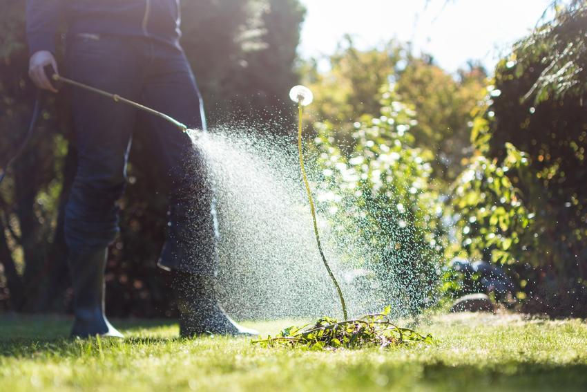 Mężczyzna zwalczający chwasty w ogrodzie opryskiem, a także środki ochrony roślin i preparaty