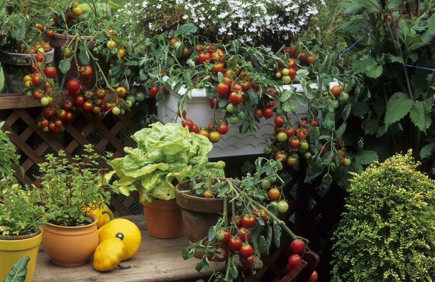 Warzywa i owoce uprawiane na balkonie, a także jak zaprojektować ogród na balkonie