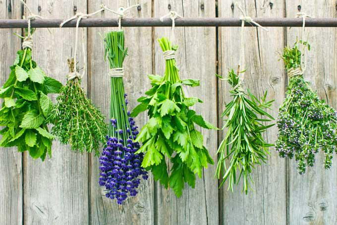 Jak i dlaczego warto założyć ekologiczny ogród ziołowy