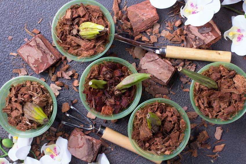 Sadzenie storczyków, a także  nasiona storczyka oraz rozmnażanie storczyków z nasion