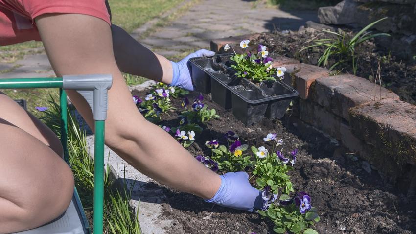 Kwiaty podczas sadzenia w ogrodzie, a także polecane sadzonki kwiatów wieloletnich