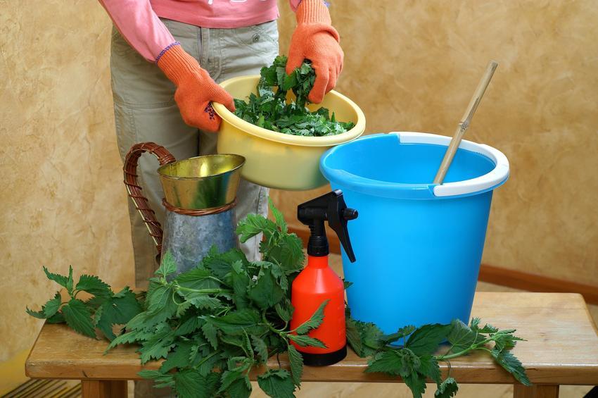 Nawóz z pokrzywy podczas przygotowania gnojówka z pokrzyw, jak stosować nawóz z pokrzyw