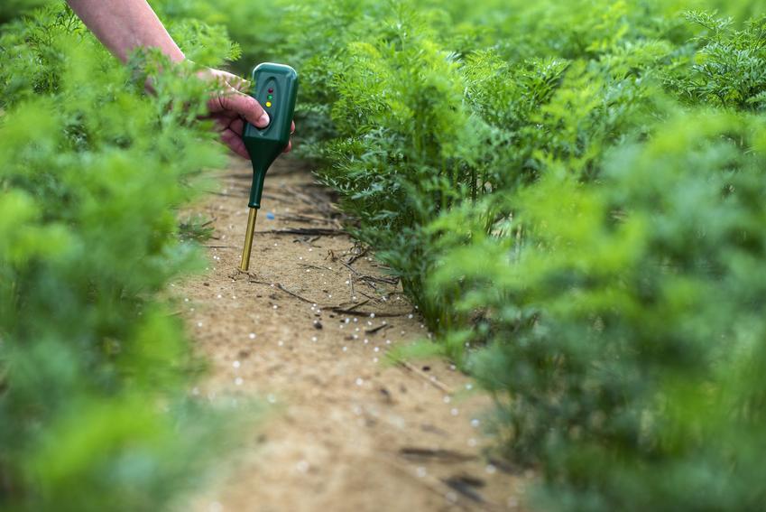 Kwasomierz glebowy podczas użycia w ogrodzie, a także cena za kwasomierz gleby