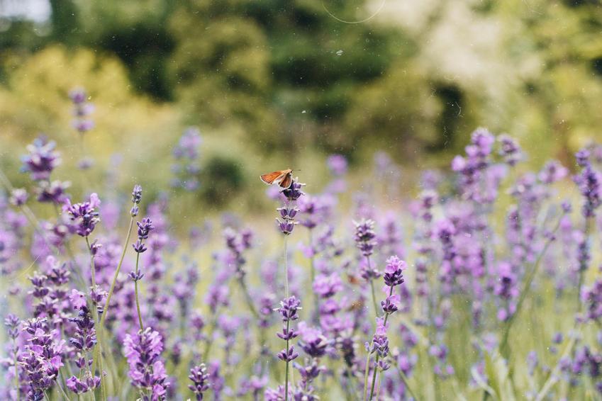 Stwórz ogród przyjazny dla pszczół