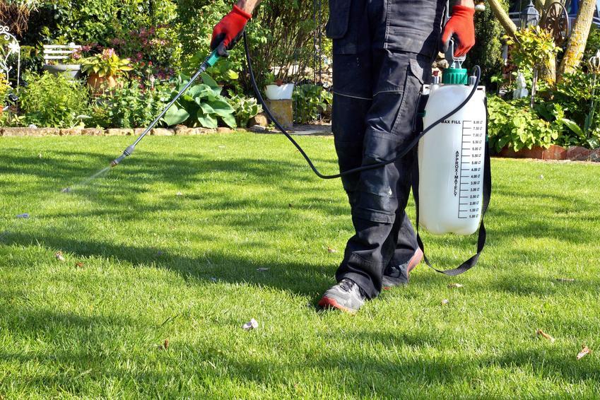 Nawożenie trawnika spryskiwaczem, czyli nawóz jesienny do trawy, jesienny nawóz do trawników