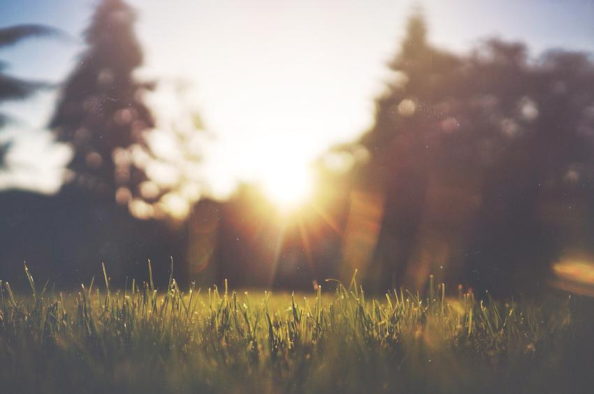 Czy wiesz, że nasiona trawy to sprytny sposób na zagęszczenie trawnika?