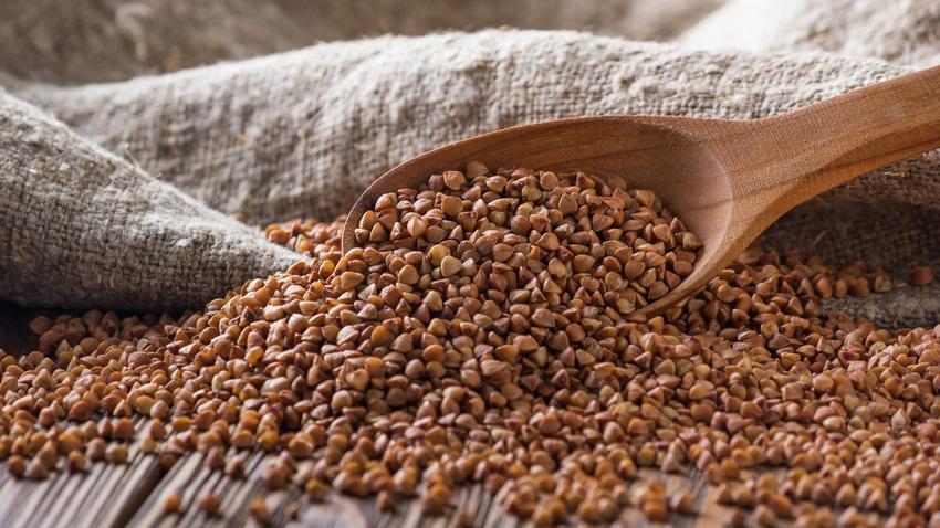 Gryka zwyczajna, Fagopyrum esculentum i jej nasiona, a także ich zastosowanie