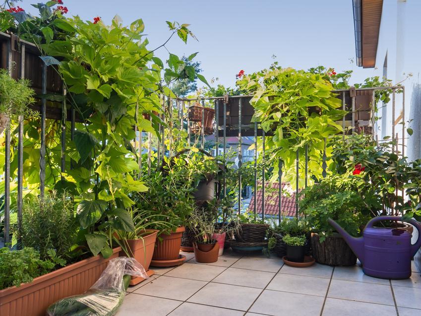Piękny balkon z roślinami, a także polecane krzewy na balkon, krzewy balkonowe