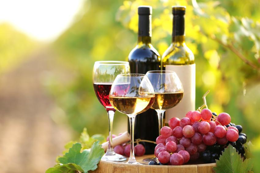Wino w kieliszka i w butelce oraz domowe wino z wingron, wino z derenia, wino z jarzębiny, wino z pigwy
