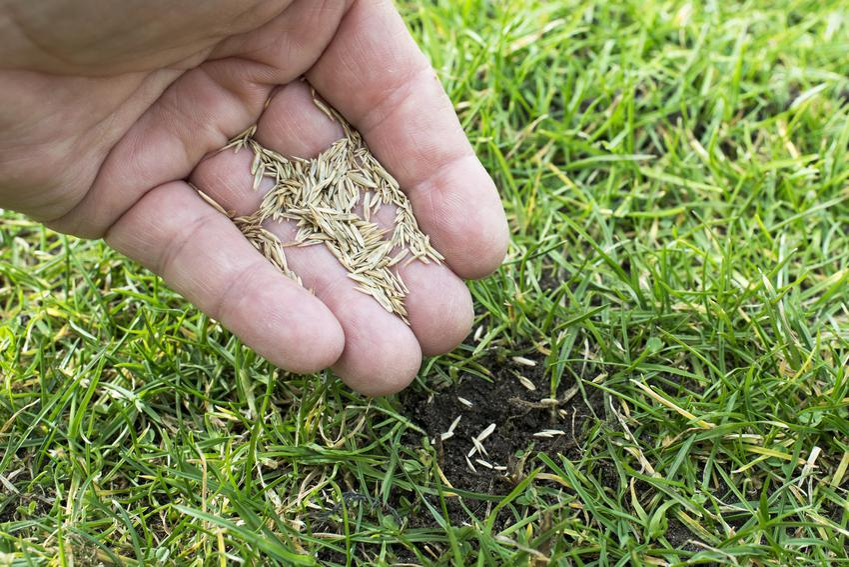 Dosiewanie trawy nasionami z dłoni oraz dosiewanie trawnika na wiosnę
