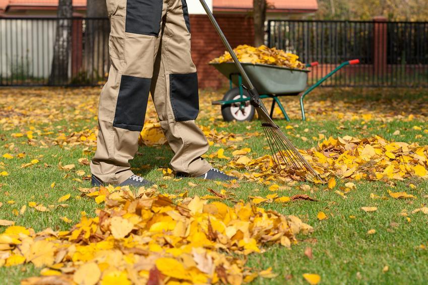 Zagrabianie liści w ogrodzie, a także przygotowanie trawnika do zimy, ostatnie koszenie trawnika przed zimą