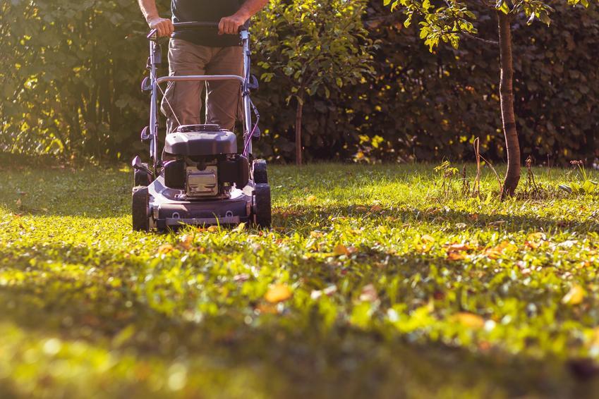 Koszenie trawy przez mężczyznę oraz przygotowanie trawnika do zimy, ostatnie koszenie trawnika przed zimą