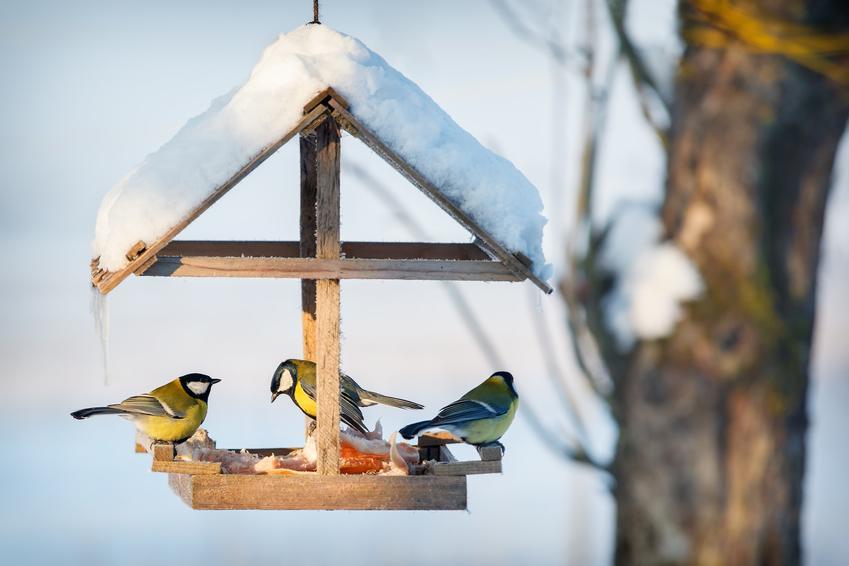 Ptaszki zimą w karmniku oraz dokarmianie zwierząt zimą, zwierząt leśnych, dokarmianie ptaków