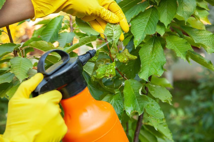 Spryskiwanie liście w ogrodzie, a także ocet na mszyce jako domowe sposoby