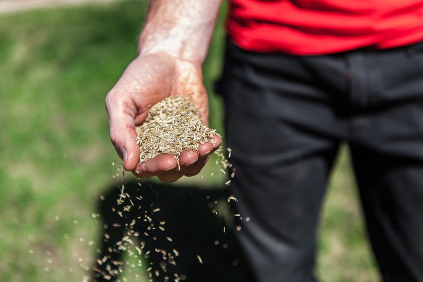 Planujesz wysiew trawy? Jakie narzędzia ogrodowe będą ci potrzebne, by stworzyć idealny trawnik