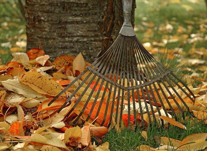 Jesień w ogrodzie - jakie prace wykonać o tej porze roku?