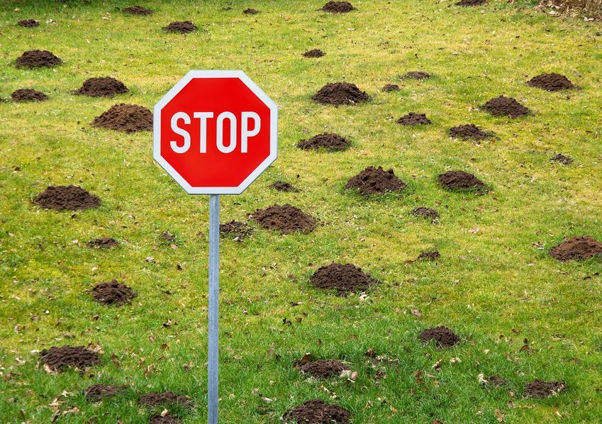 Kretowisko na trawniku oraz znak stopu, a także trutka na krety i zwalczanie kretów