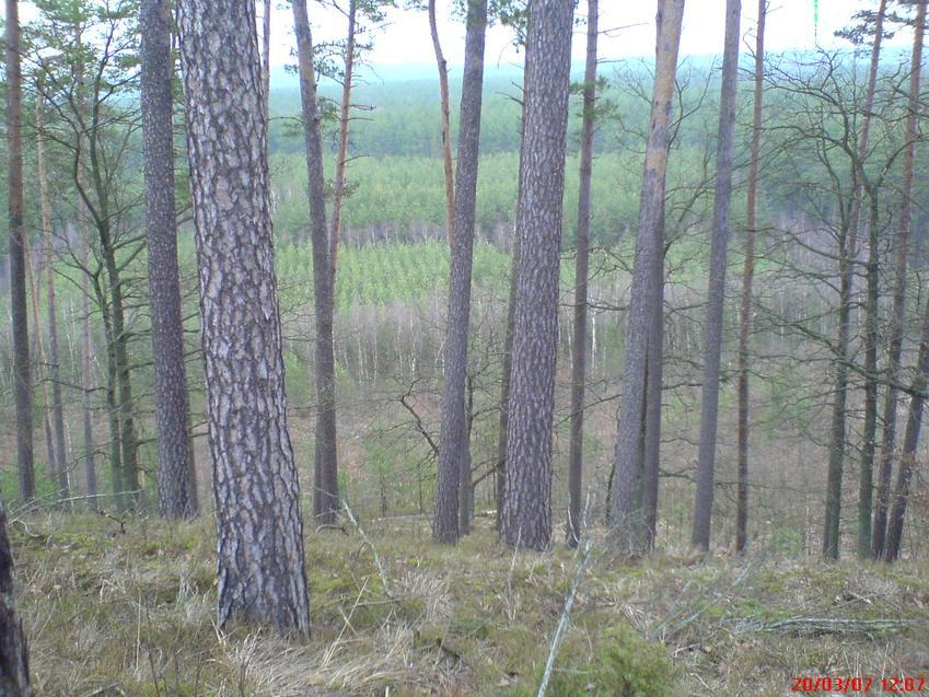 Las i drzewa jesienią, a także informacje o losach i stanie drzew w Polsce