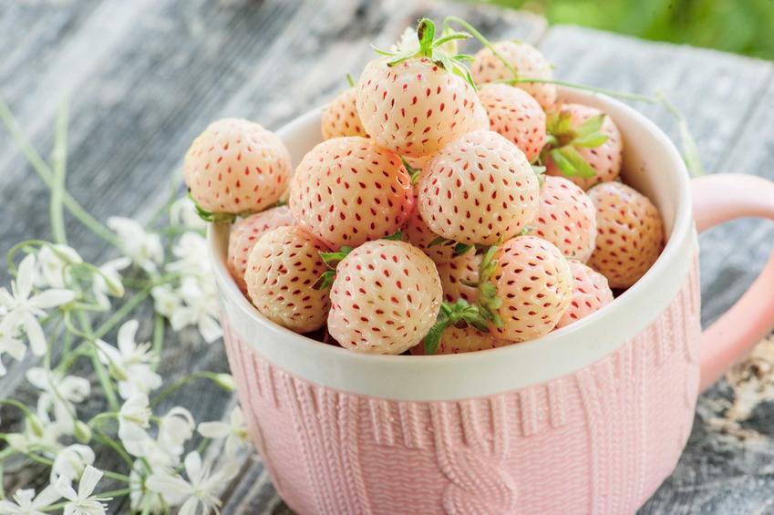 Białe truskawki pineberry w dużym kubku, a także odmiany, sadzenie, uprawa oraz pielęgnacja i porady dla ogrodników