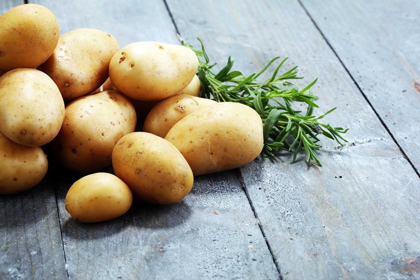 Ziemniaki 'Gala' leżące na stole, a także charakterystyka odmiany, sadzenie, wymagania, pielęgnacja i uprawa w ogrodzie, zastosowanie krok po kroku