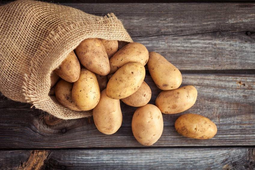 Ziemniaki 'Bellarosa' wysypujące się z worka jutowego, a także opis, uprawa, wymagania i zastosowanie odmiany