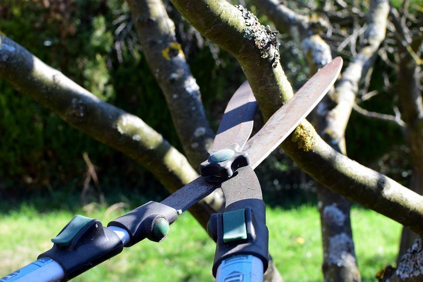 Jakich narzędzi używać do przycinania drzew?