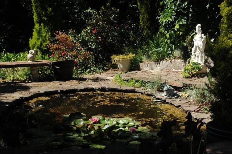 Co trzeba wiedzieć przy zakładaniu oczka wodnego w ogrodzie?