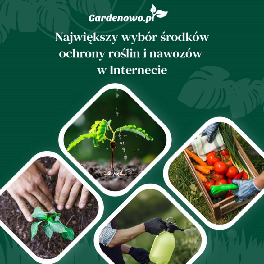 Nawożenie trawnika. Jak i czym nawozić trawnik?