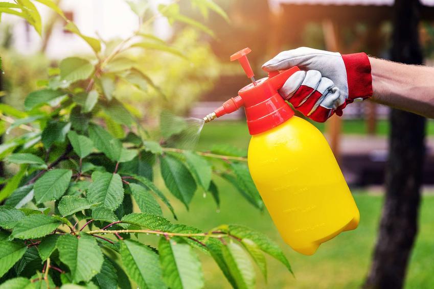 Opryski drzew owocowych. Terminy i preparaty