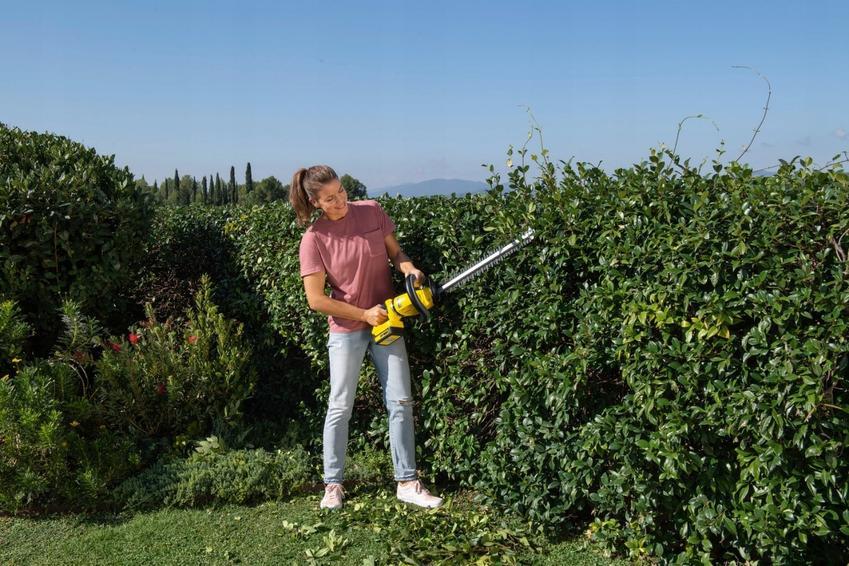Jakie wybrać nożyce ogrodowe?