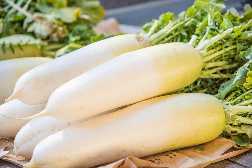 Biała rzodkiew leżąca na desce do krojenia, a także opis, wymagania, zastosowanie, uprawa i pielęgnacja