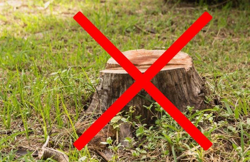 Usuwanie korzeni drzew - jak? czym? za ile?