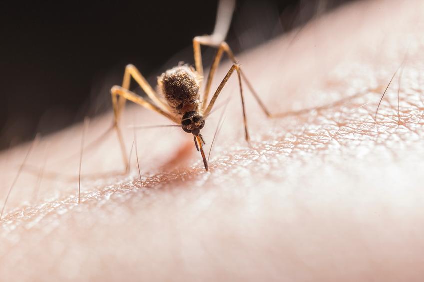 Komary – jak się ich pozbyć?