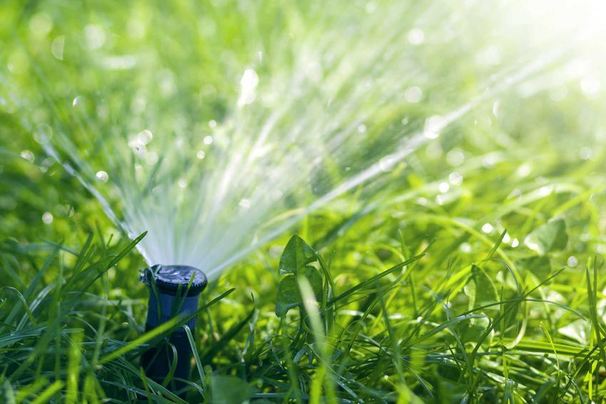 Wysuwany zraszacz do ogrodu w czasie podlewania roślin, a także najlepsze zraszacze do ogrodu - popularne rodzaje oraz modele zraszaczy