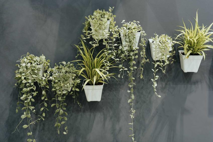 Piękne doniczki wiszące na ścianie z zielonymi roślinami, a także inne doniczki wiszące - TOP 4 najlepszych modeli