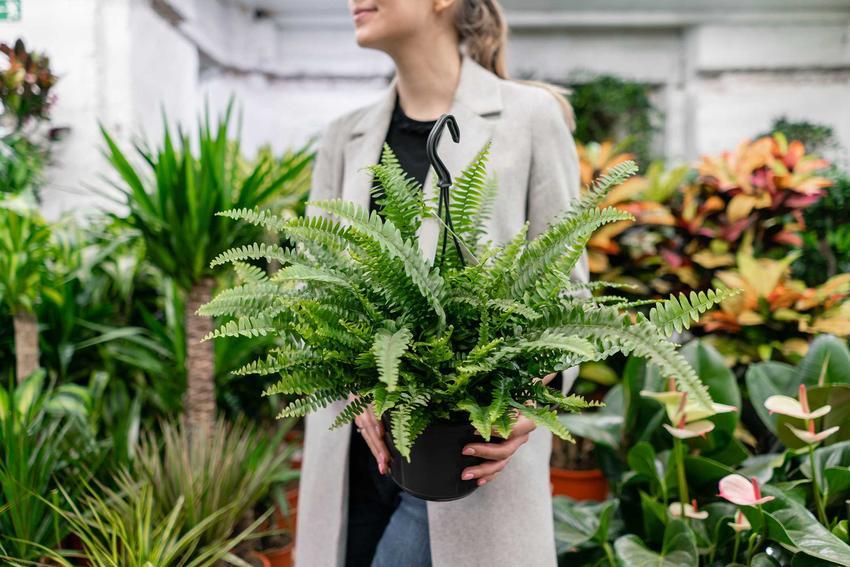 Kobieta wybierająca roślony w markecie, a także na co zwrócić uwagę kupując rośliny z marketu krok po kroku