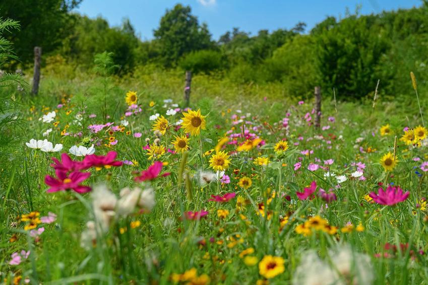 Łąka kwietna na tle lasu z kolorowymi kwiatami rudbekii, onętków oraz innych drobnych kwiatów, a także rodzaje roślin, wysiew, pielęgnacja oraz uprawa
