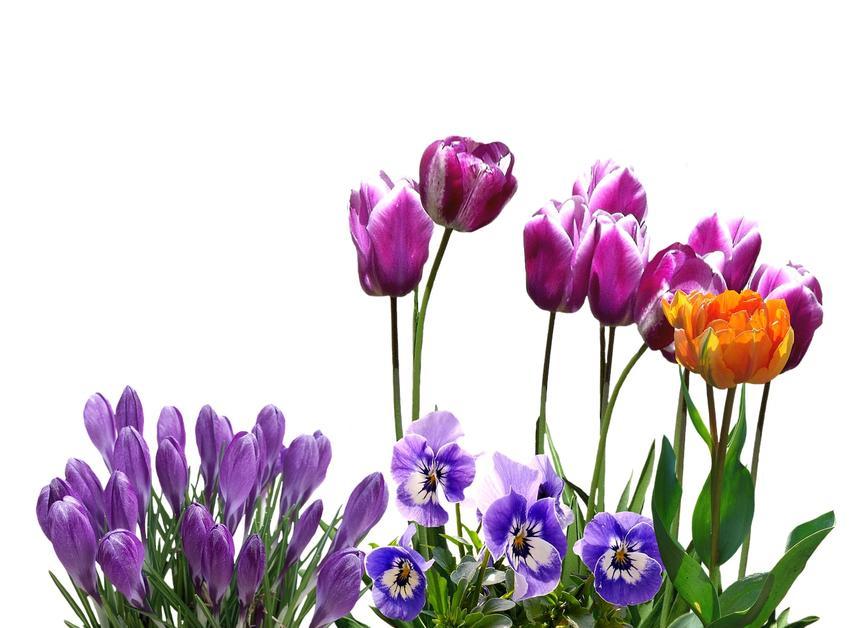 Jakie kwiaty sadzić wiosną, a jakie jesienią? Sprawdź, czego nie może zabraknąć w twoim ogrodzie