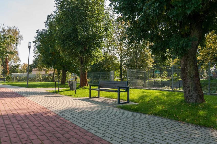 Drzewa w parku, czyli gatunki drzew, które najlepiej oczyszczają powietrze w mieście