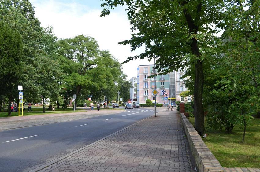 Drzewa posadzone wzdłuż ulicy w mieście, a także najlepsze drzewa oczyszczające powietrze, czyli rośliny, które oczyszczają powietrze