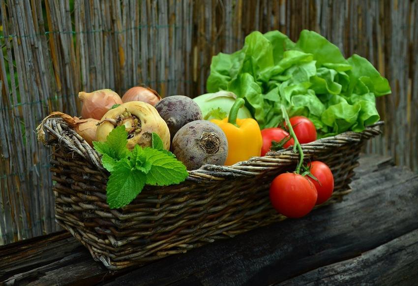 Naturalne środki ochrony w ogrodnictwie – czyli piękny ogród i zdrowe środowisko