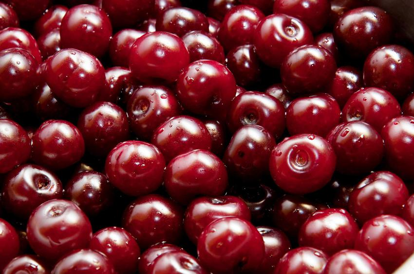 Owoce wiśni groniastej przed przerobieniem na kompot, a także wiśnia groniasta, opis, wymagania i porady
