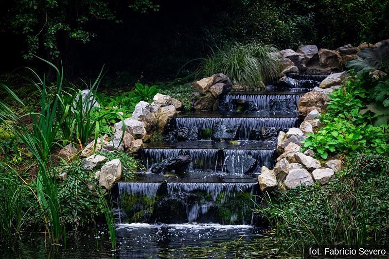 Wpływ ogrodowego oczka wodnego na otaczające środowisko
