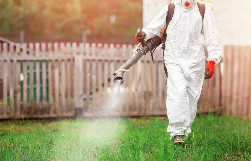 Chemiczne zwalczanie komarów w ogrodzie środkami owadobójczymi na trawniku krok po kroku