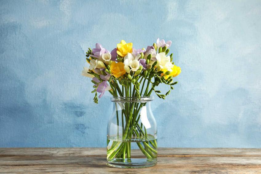 Frezje w wazonie na stoliku drewnianym, a także co zrobić, by kwiaty cięte stały jak najdłużej krok po kroku