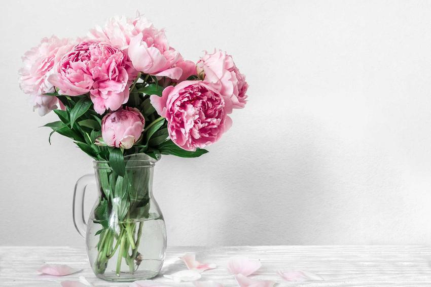 Piwonie w szklanym wazonie na stoliku, a także inne kwiaty cięte w wazonie, czyli co zrobić, by stały jak najdłużej